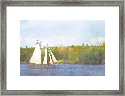 Schooner Castine Harbor Maine Framed Print by Carol Leigh