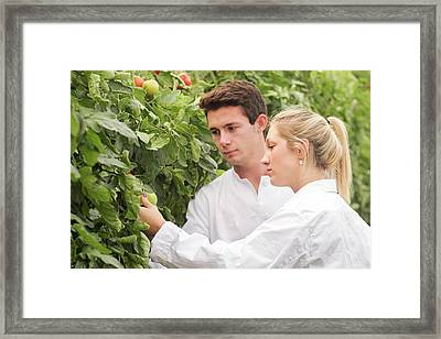 Scientists Examining Tomatoes Framed Print by Gombert, Sigrid