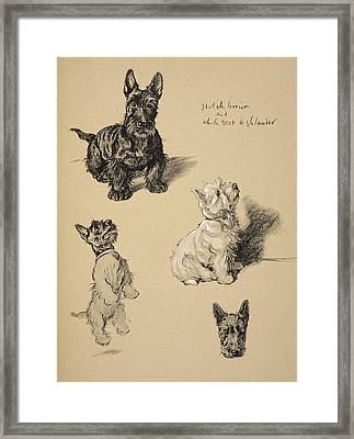 Scotch Terrier And White Westie Framed Print by Cecil Charles Windsor Aldin
