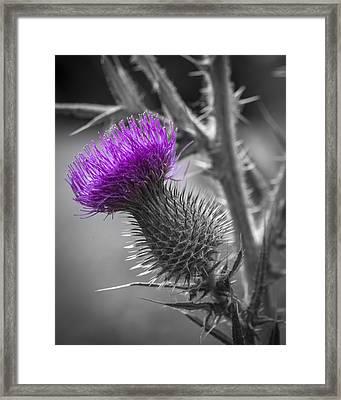 Scotland Calls 2 Framed Print by Scott Campbell