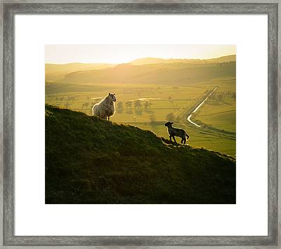 Scottish Sheep And Lamb Framed Print by Mr Doomits