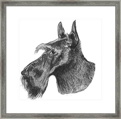 Scottish Terrier Dog Framed Print by Catherine Roberts