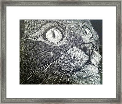 Scratch Art Kitty Cat Framed Print by Brenda Brown
