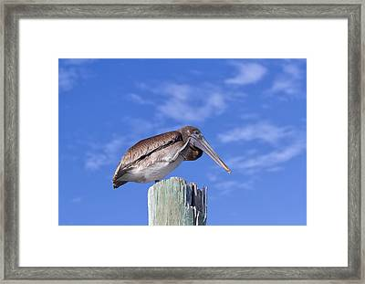 Scratching Framed Print by Kim Hojnacki