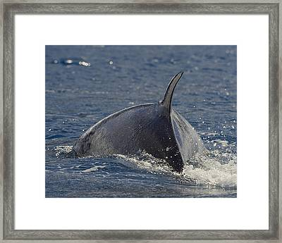 Scratching The Surface Framed Print by Tony Beck