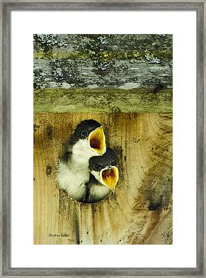 Screaming Hungry Framed Print by Christina Rollo