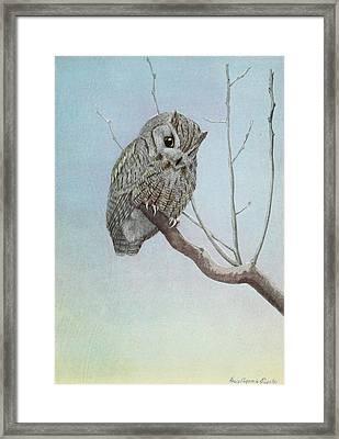 Screech Owl Framed Print by Louis Agassiz Fuertes