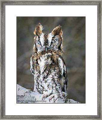 Screech Owl On The Trail Framed Print by LeeAnn McLaneGoetz McLaneGoetzStudioLLCcom
