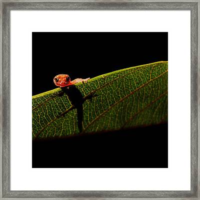 Screen Test Framed Print by Stuart Harrison