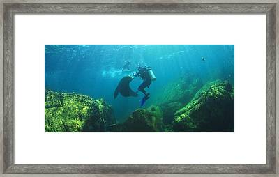Scuba Divers With Sea Lions Underwater Framed Print by Stuart Westmorland