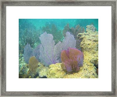 Sea Fans Framed Print by Adam Jewell