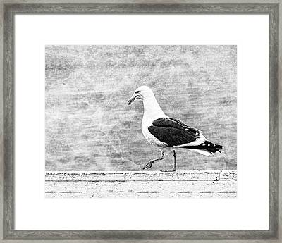 Sea Gull On Wharf Patrol Framed Print by Jon Woodhams