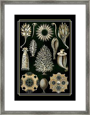 Sea Harmony 2 Framed Print by Little Vintage Chest