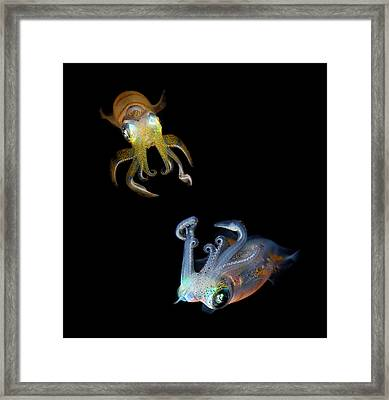 Sea Jewels Framed Print by Andrey Narchuk