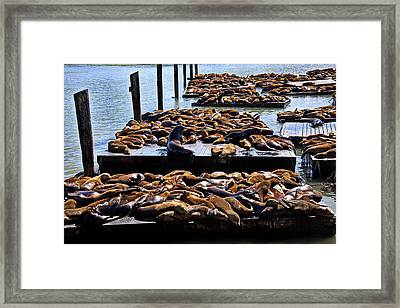 Sea Lions At Pier 39  Framed Print by Garry Gay