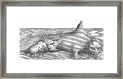 Sea Monster Attacks Ziphius, 16th Framed Print by Photo Researchers