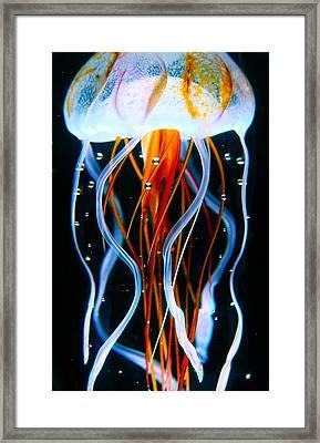 Sea Nettle Jellyfish Framed Print by Karon Melillo DeVega
