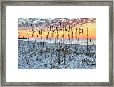Sea Oat Sunrise Framed Print by JC Findley