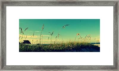 Sea Oats Under The Morning Sun In Sarasota Framed Print by Patricia Awapara