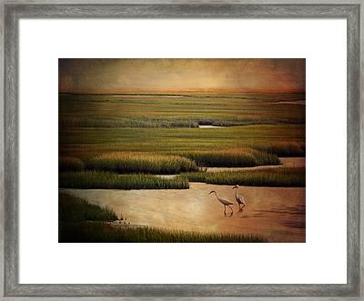 Sea Of Grass Framed Print by Lianne Schneider