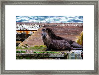 Sea Otters Framed Print by Robert Bales
