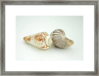 Sea Shell And Shadows Framed Print by Toppart Sweden