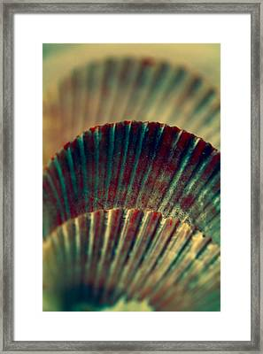 Sea Shell Art 2 Framed Print by Bonnie Bruno
