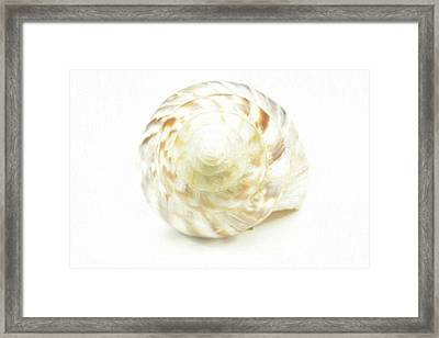 Sea Shell In Oil Paint  Framed Print by Toppart Sweden