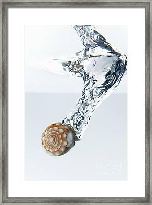 Sea Shell Splashing Underwater Framed Print by Sami Sarkis