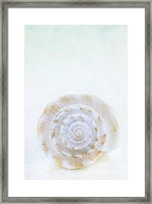 Sea Shell Framed Print by Stephanie Frey