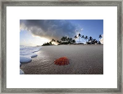 Sea Shell Sunrise Framed Print by Sean Davey
