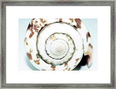 Sea Shell Framed Print by Toppart Sweden