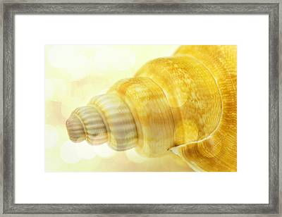 Sea Shell With Bokhe Framed Print by Toppart Sweden