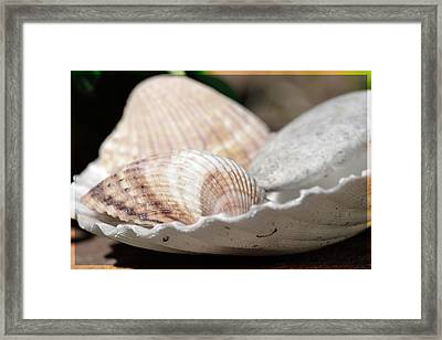 Sea Shells In A Shell Framed Print by Toppart Sweden