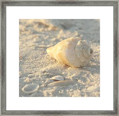Sea Shells Framed Print by Kim Hojnacki