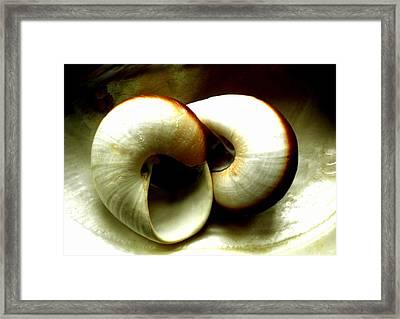Sea Shells Meeting Framed Print by Colette V Hera  Guggenheim