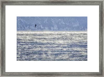 Sea Smoke And Gull Blues Framed Print by Marty Saccone