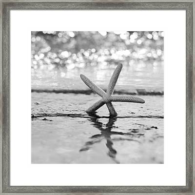 Sea Star Bw Framed Print by Laura Fasulo