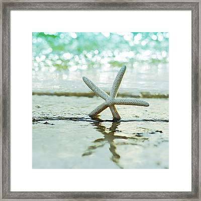 Sea Star Framed Print by Laura Fasulo