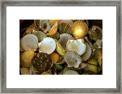 Sea Treasures Framed Print by Karen Wiles