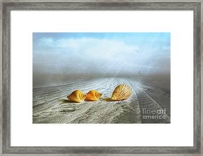 Sea Treasures Framed Print by Veikko Suikkanen