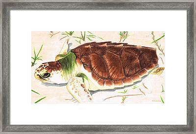 Sea Turtle Art By Sharon Cummings Framed Print by Sharon Cummings