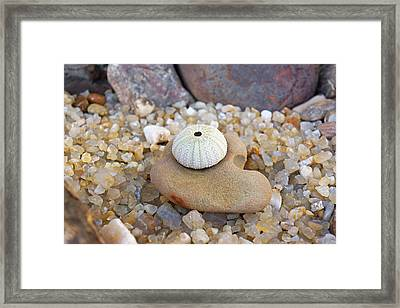Sea Urchin Art Prints Coastal Beach Agates Framed Print by Baslee Troutman