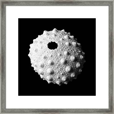 Sea Urchin Framed Print by Jim Hughes