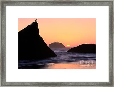 Seagull And Sunset Framed Print by Inge Johnsson