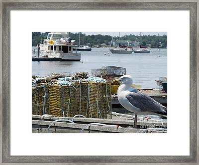 Seagull At Rest On Lobster Box  - Digital Art  Framed Print by Anthony Morretta