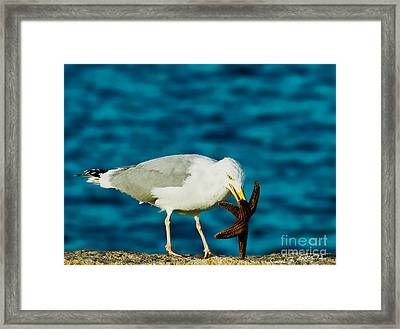 Seagull Dancing With A Star Framed Print by Carol F Austin