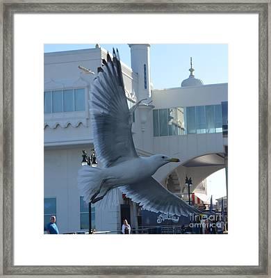 Bird's Eye View Framed Print by Michael Keough