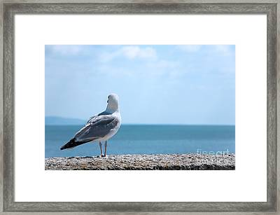 Seagull Looking Out To Sea Framed Print by Natalie Kinnear