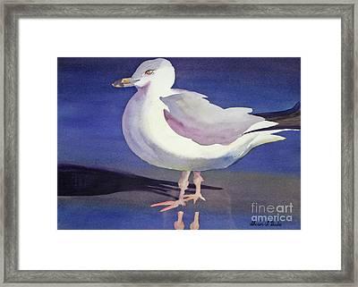 Seagull Framed Print by Shirin Shahram Badie